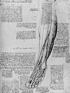 'Anatomical Study of Muscles of Foot', 1928 by Leonardo Da Vinci