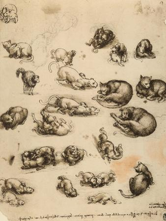 Cats, Lions and Dragons, Drawing, Royal Library, Windsor by Leonardo da Vinci