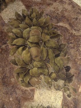 Detail of Fruits and Leaves, from the Last Supper by Leonardo da Vinci