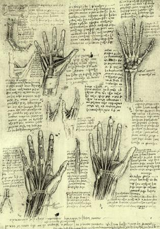 Functions of Human Hand by Leonardo da Vinci