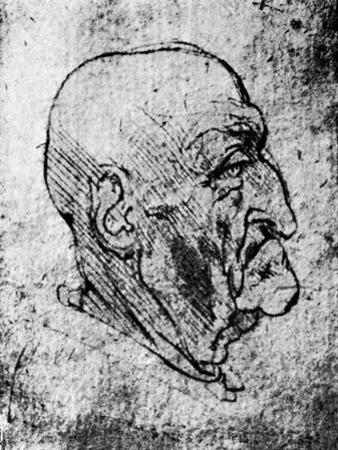 Head of an Old Man, 1913 by Leonardo da Vinci