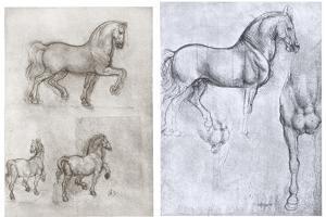 Horses, C1490-1510 by Leonardo da Vinci