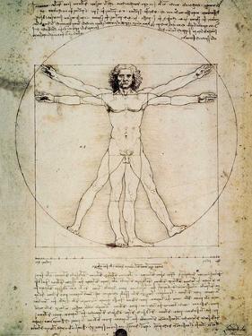 L'Uomo Vitruviano by Leonardo Da Vinci