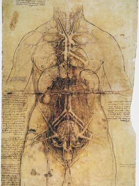 Leonardo: Anatomy, C1510 by Leonardo da Vinci