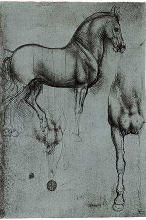 Leonardo da Vinci (Horse trials) Plastic Sign by Leonardo da Vinci