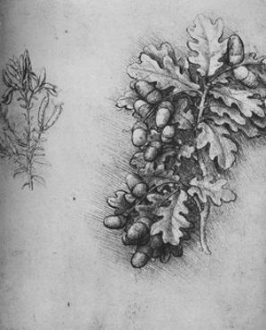 'Oak-Leaves with Acorns and Dyer's Greenweed', c1480 (1945) by Leonardo Da Vinci