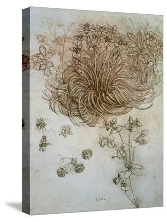 Star of Bethlehem, Wood Anemone and Sun Spurge by Leonardo da Vinci