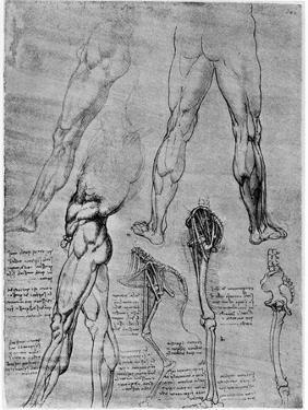 Studies in Comparative Anatomy, 1506-1507 by Leonardo da Vinci