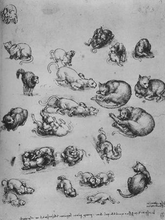 'Studies of Cats and of a Dragon', c1480 (1945) by Leonardo Da Vinci