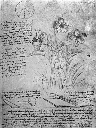 Studies of Violas by Leonardo da Vinci