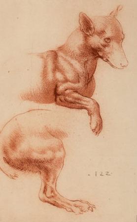 Study of a Pomeranian Dog, Drawing, Royal Library, Windsor by Leonardo da Vinci