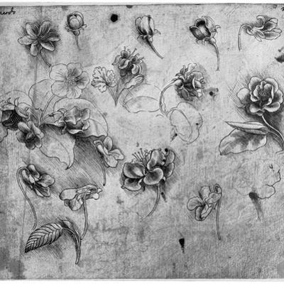 Study of Flowers, C1481-1483 by Leonardo da Vinci