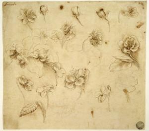 Study of Flowers by Leonardo da Vinci