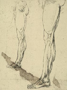 Study of Legs, Drawing, Royal Library, Windsor by Leonardo da Vinci