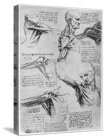 Study of Shoulder Joints, 1510-1511 by Leonardo da Vinci