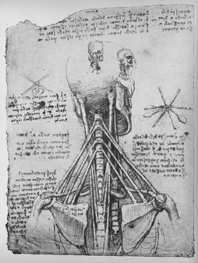 'Study of the Back View of a Skeleton, Showing the Tendons of the Neck', c1480 (1945) by Leonardo Da Vinci