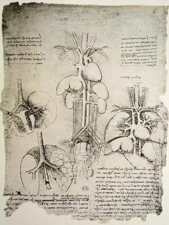 The Heart and the Circulation, Facsimile of the Windsor Book by Leonardo da Vinci