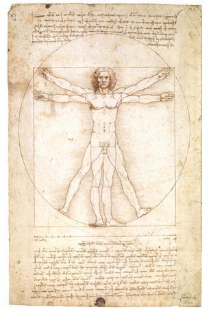 Vitruvian Man 1492 Leonardo Da Vinci Art Poster by Leonardo da Vinci