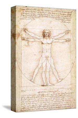 Vitruvius Man by Leonardo da Vinci