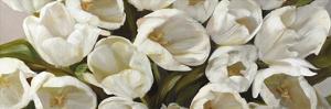 Tulipani Bianchi by Leonardo Sanna