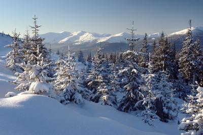 A Frosty and Sun Day Is in Mountains by Leonid Tit
