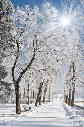 Affordable Winter Posters for sale at AllPosters com