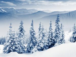 Beautiful Winter Landscape with Snow Covered Trees by Leonid Tit