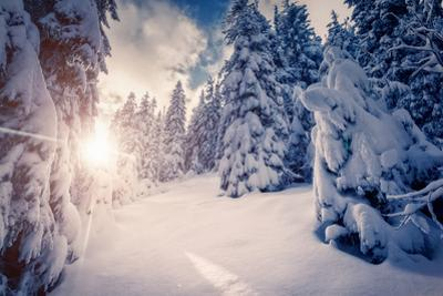 Fantastic Winter Landscape in the Sunny Beams. Dramatic Wintry Scene. Carpathian, Ukraine, Europe. by Leonid Tit
