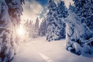 Fantastic Winter Landscape in the Sunny Beams. Dramatic Wintry Scene. Carpathian, Ukraine, Europe. by Leonid Tit