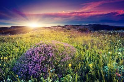 Magic Flowers in Mountain Landscape with Dramatic Overcast Sky. Carpathian, Ukraine, Europe. Beauty by Leonid Tit