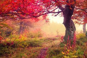 Majestic Landscape with Autumn Trees in Forest. Carpathian, Ukraine, Europe. Beauty World. Retro Fi by Leonid Tit