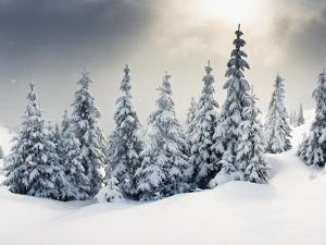 Trees Covered with Hoarfrost and Snow in Mountains by Leonid Tit