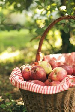 Red Apples Basket by Les Hirondelles Photography