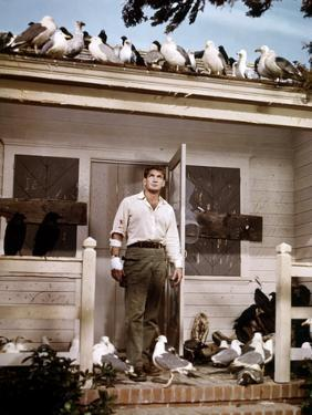 Les Oiseaux THE BIRDS d'Alfred Hitchcock with Rod Taylor, 1963 (photo)