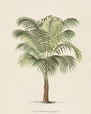 Les Palmiers II