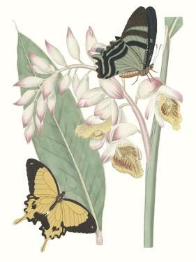 Les Papillons I