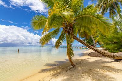 https://imgc.allpostersimages.com/img/posters/les-tipaniers-tiahura-moorea-french-polynesia_u-L-Q1CZRG90.jpg?p=0
