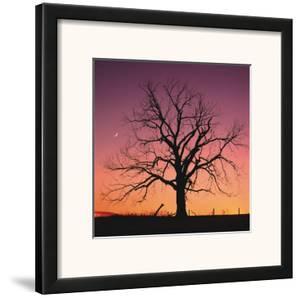 Arboral Afterglow by Leslie Mueller
