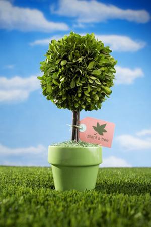Miniature Tree in Pot