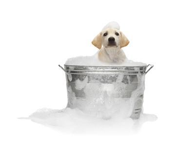 Puppy Taking Bath by Lew Robertson