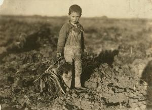 6 Year Old Jo Pulling Sugar Beets on a Farm Near Sterling, Colorado, 1915 by Lewis Wickes Hine