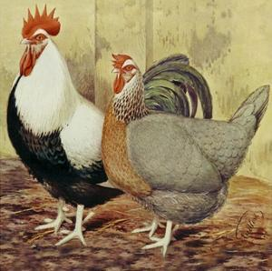 Chickens: Silver-Grey Dorkings by Lewis Wright