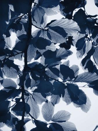 Indigo Leaves by Lexie Greer