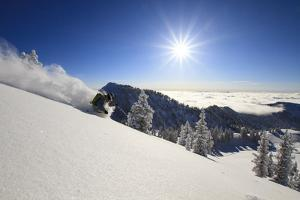 Skiing First Tracks On The Backside Of Catherines In Alta, Utah by Liam Doran