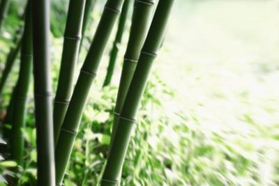Abstract Green Bamboo Grove. by Liang Zhang