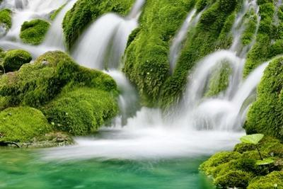 Natural Spring Waterfall Surrounded by Moss and Lush Foliage. by Liang Zhang