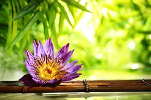 Spa Still Life with Lotus Float on Water,Bamboo Background. by Liang Zhang