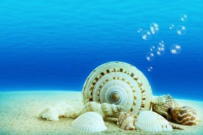 The Underwater World,Seashells with Underwater Background. by Liang Zhang