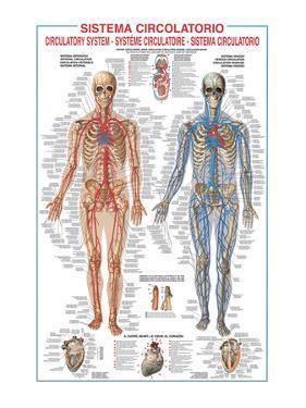 Circulatory System by Libero Patrignani