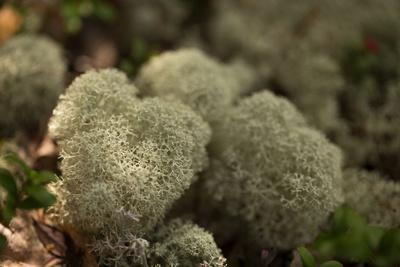 https://imgc.allpostersimages.com/img/posters/lichen-in-beautiful-shape_u-L-Q1EXPOS0.jpg?artPerspective=n